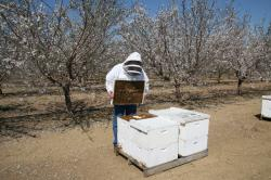 Beekeeping As a Business Venture is on the Rise